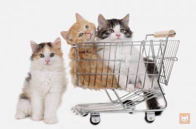 Angebot, Kätzchen im Einkaufswagen