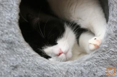 Katze schläft in Höhle