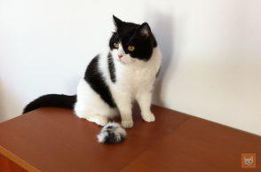 Katze mit Katzenball aus Fell
