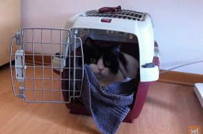 Katze in Transportbox