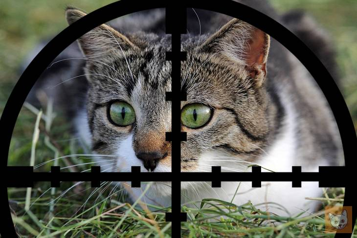 jagd auf katzen schie en schaufeln schweigen lieblingskatze. Black Bedroom Furniture Sets. Home Design Ideas