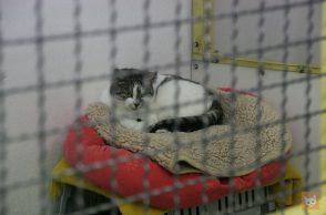 """Katze im Tierheim """"hinter Gittern"""""""