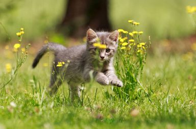 Kätzchen springt in Wiese