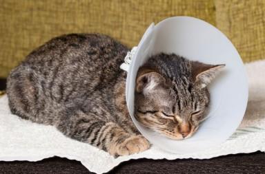 Katze mit Kragen