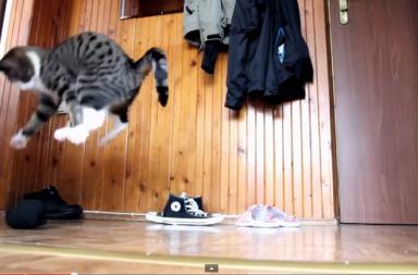 Katze spinnt