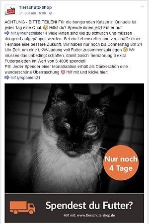 Tierschutz-Shop: Blinde Katze