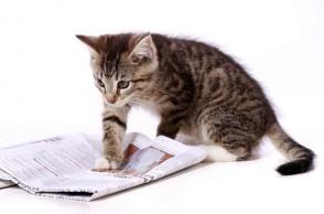Katze liest Zeitung