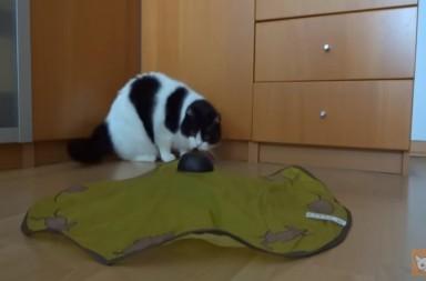 Katzenspielzeug Mäusejagd von Tchibo