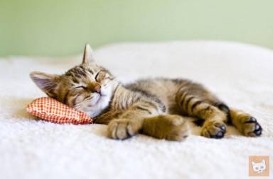 Kätzchen schläft