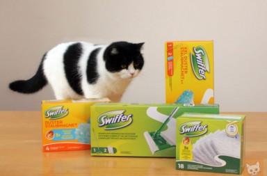 Swiffer Packungen und Katze