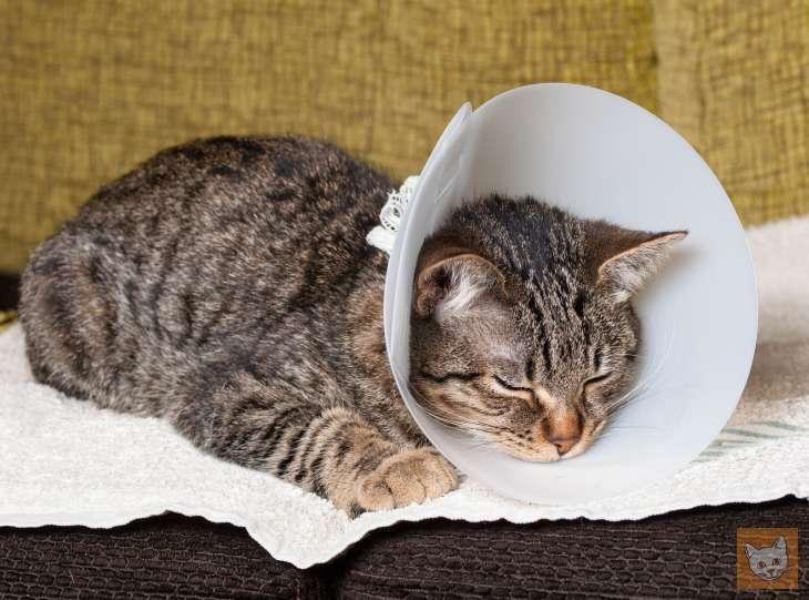 wann muss eine katze zum tierarzt 5 warnsignale. Black Bedroom Furniture Sets. Home Design Ideas