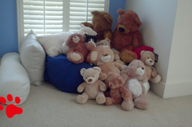 Katze mit Teddybären