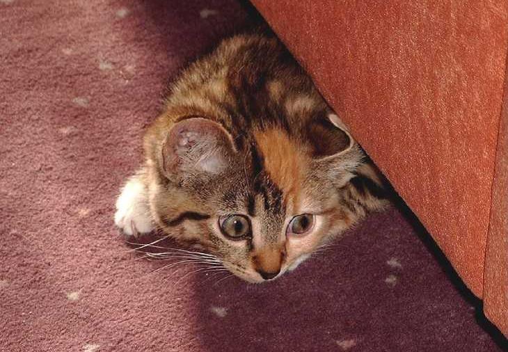 Ängstliches Kätzchen