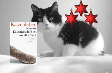 Cover Bachstein: Katzenleben