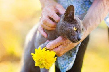 Alte Katzen: Graue Katze mit Blume