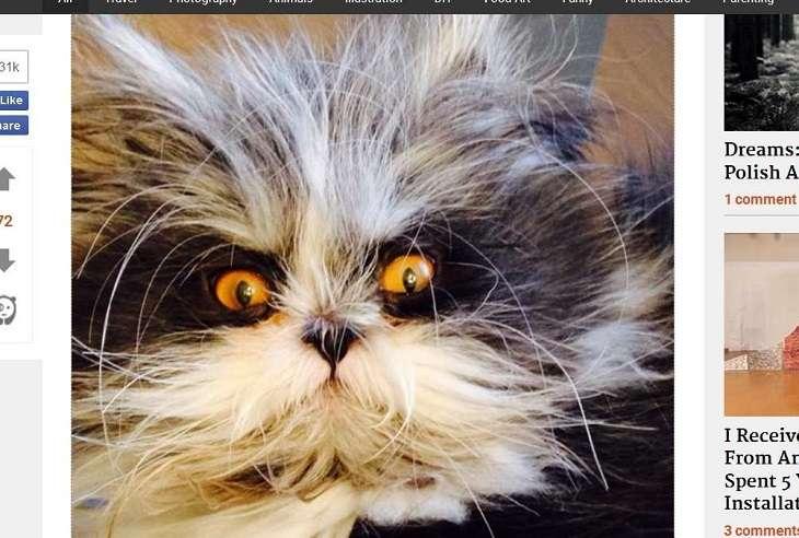 Katze Atchoum