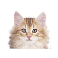 Darf Der Vermieter Katzen Verbieten Lieblingskatze