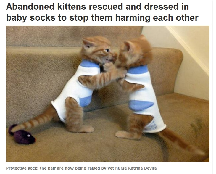 Kitten mit Babysocken