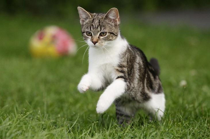 Katze spielt im Gras