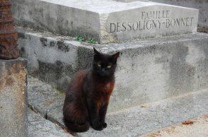 Katze vor Grab