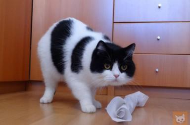 Katze mit Seidenpapier