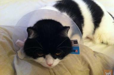 Katze mit Trichter