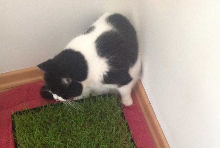 Elvis mit Katzengras