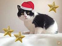 Elvis mit Weihnachtsmütze