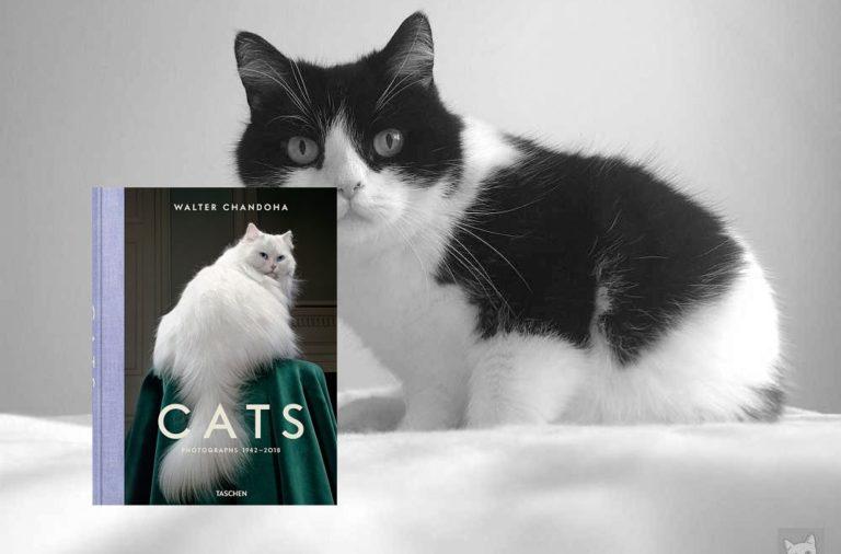 Ein opulenter Bildband mit Katzenfotos von Walter Chandoha