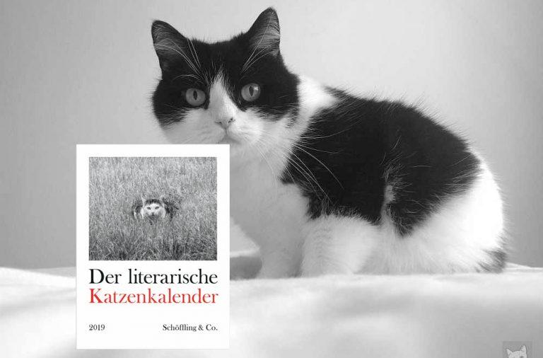 Geschenktipp: Der literarische Katzenkalender 2019