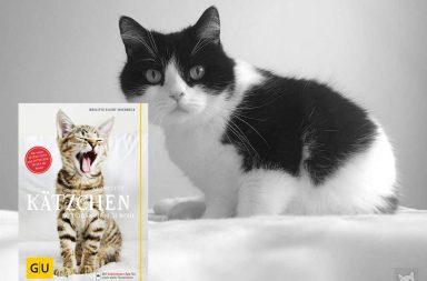 Katze mit Buch
