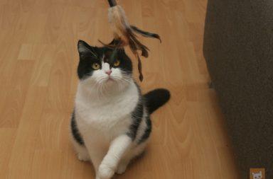 Katze mit Spielangel