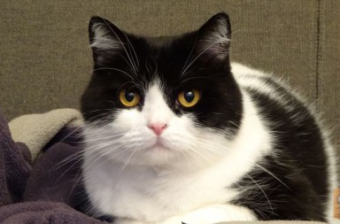 Katze auf Pulli