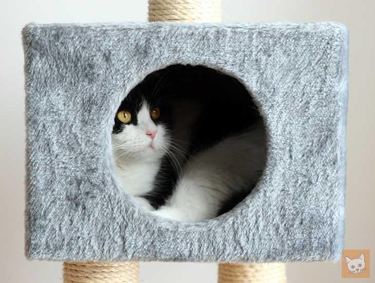 Sind Katzen Kitzelig