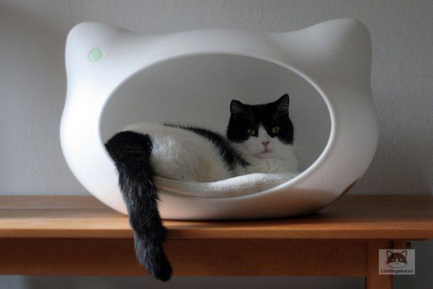 Katzen in Katzenhöhle