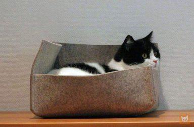 Katze im Katzenbett Groovie