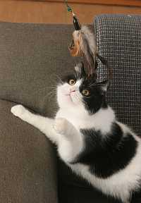 Katze mit Katzenangel