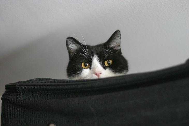 Katze auf Koffer
