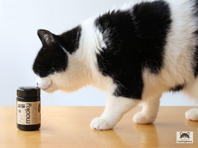 """Katze mit """"Verdauung Plus"""" von mooky"""