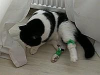 Katze mit Pflastern an Beinen