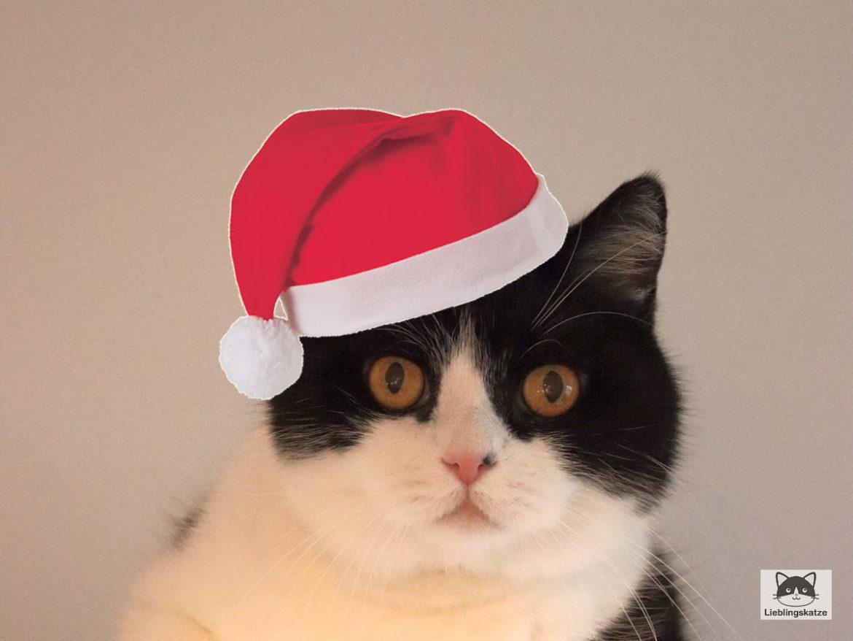 Frohe Weihnachen: Katze mit Nikolausmütze