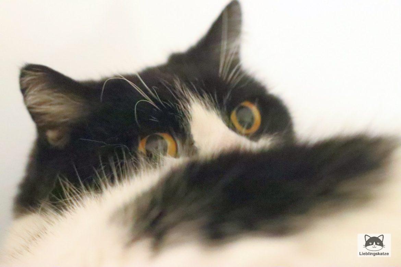 Katze blickt zurück
