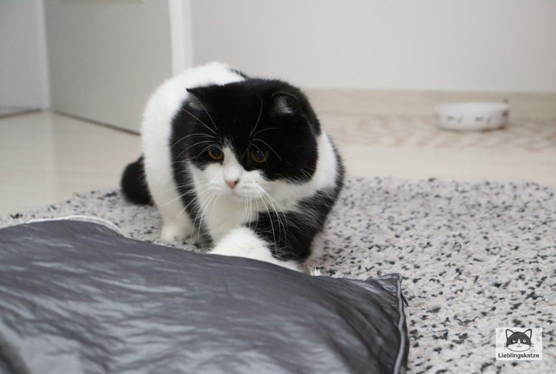 Katze spielt nicht: Katze spielt mit Schnur