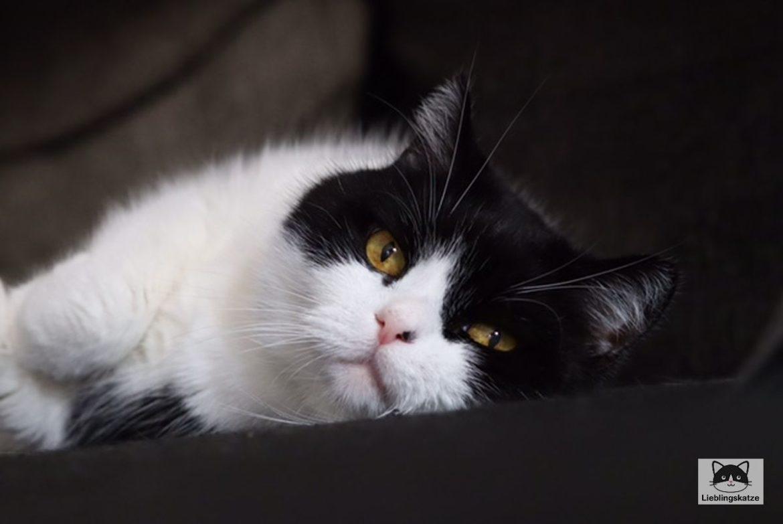 Atemfrequenz Katze messen
