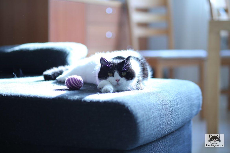Weltkatzentag 2021: Katze chillt auf Sofa
