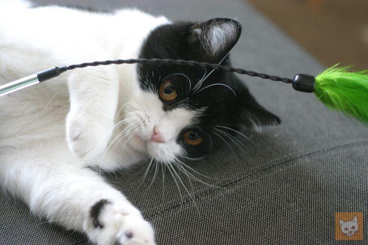 Katze mit Federwedel
