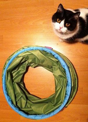 Zusammengefalteter Tunnel mit Katze