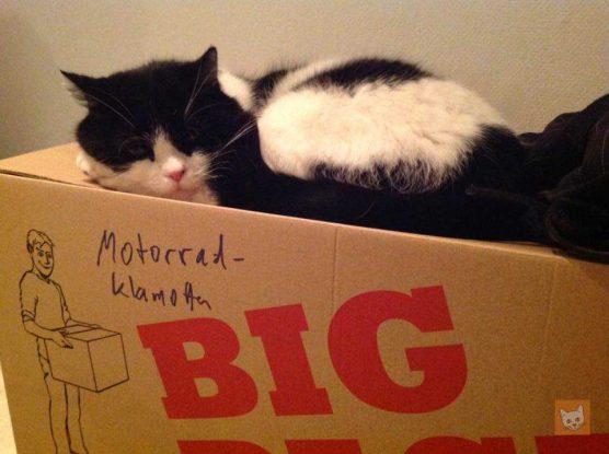 Katze auf Umzugskiste