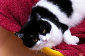 Katze im Wäschekorb