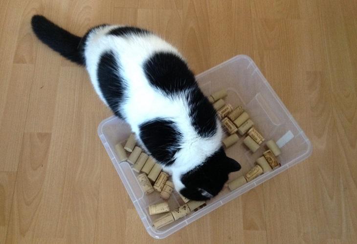 Katze mit Wühlkiste